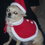 Sadie is all ready for Christmas